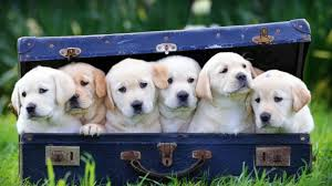 Dog Affiliate