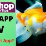 Fish Blast App Review